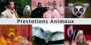 Prestations d'animaux