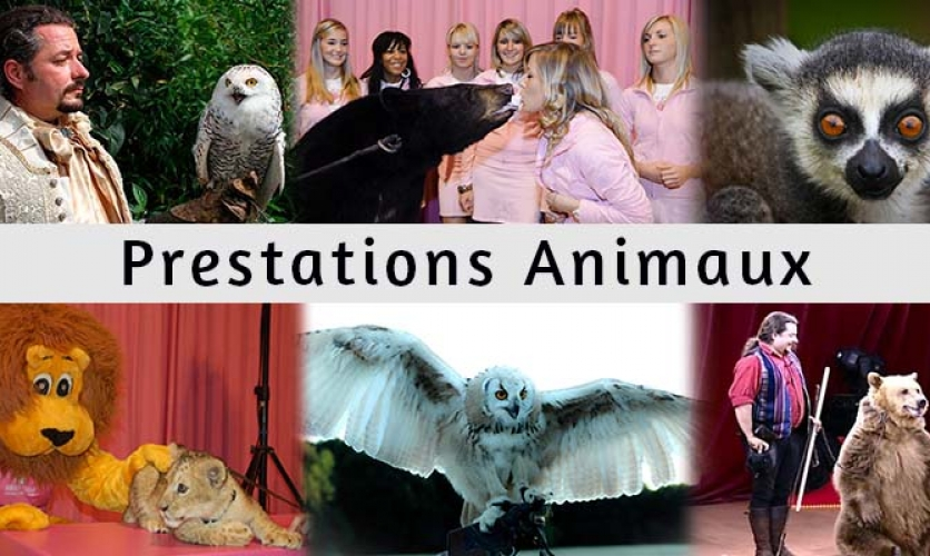 Prestations d'animaux